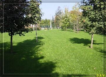 Verde residenziale progettazione del verde for Progettazione piccoli giardini